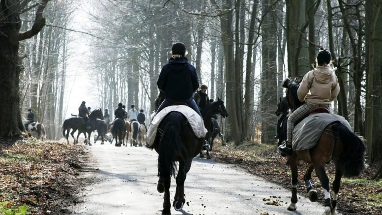 Pressemeddelelse Stoette til ny hesteportal i Guldborgsund e1573300691744